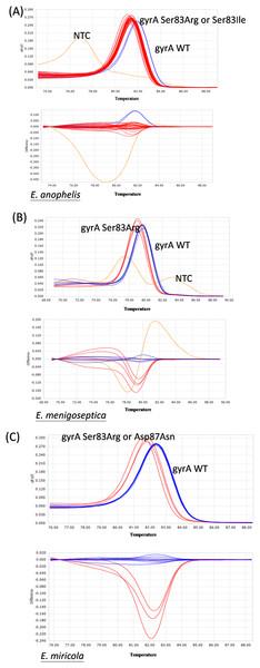 Representative HRM analysis of gyrA mutation and wild-type in Elizabethkingia species isolates.