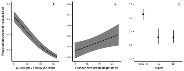 Predicted proportion of mussels killed by European green crabs in relation to prey density, claw size (mm), and the region of origin, derived from top generalized linear mixed-effects model.