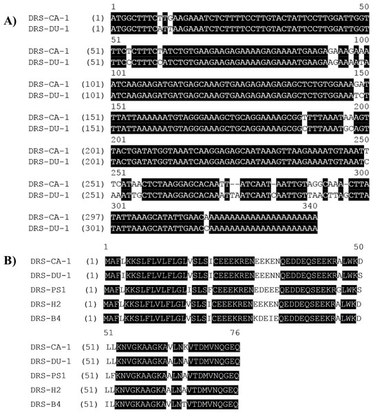 (A) Alignment of nucleotide sequences of cloned cDNAs encoding the biosynthetic precursors of DRS-CA-1 and DRS-DU-1. (B) Alignment of open-reading frame sequences of DRS-CA-1, DRS-DU-1 and other dermaseptin peptides characterized from other species.