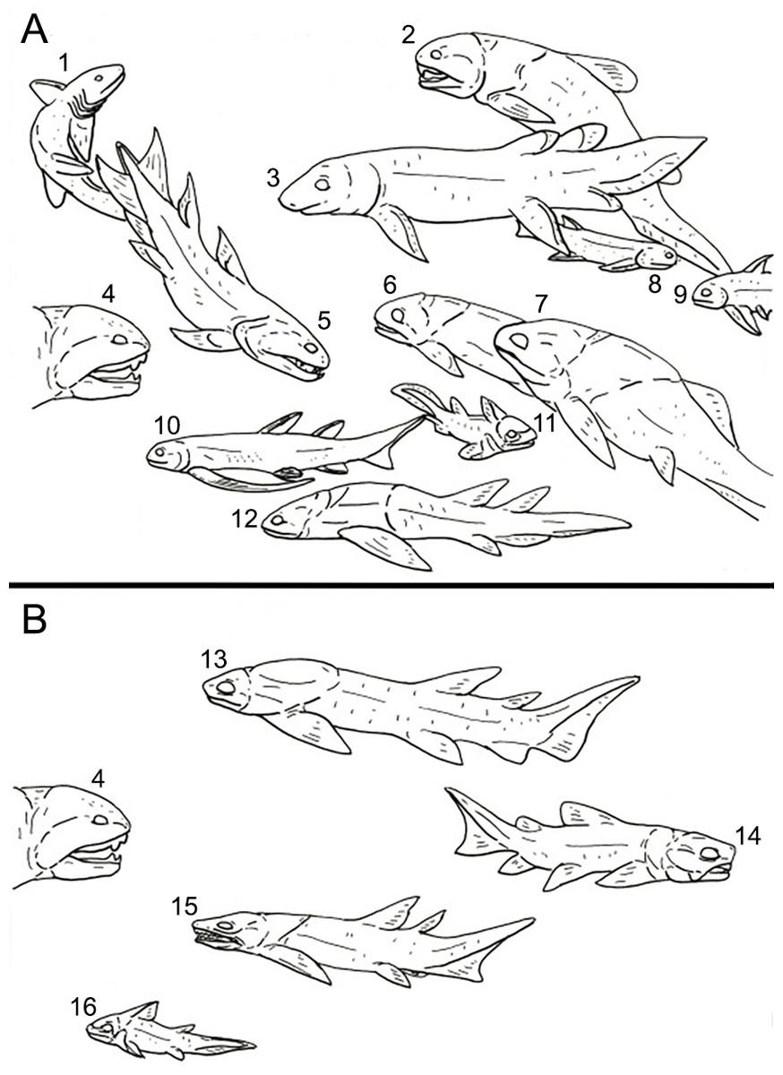 Fish Drawing 1