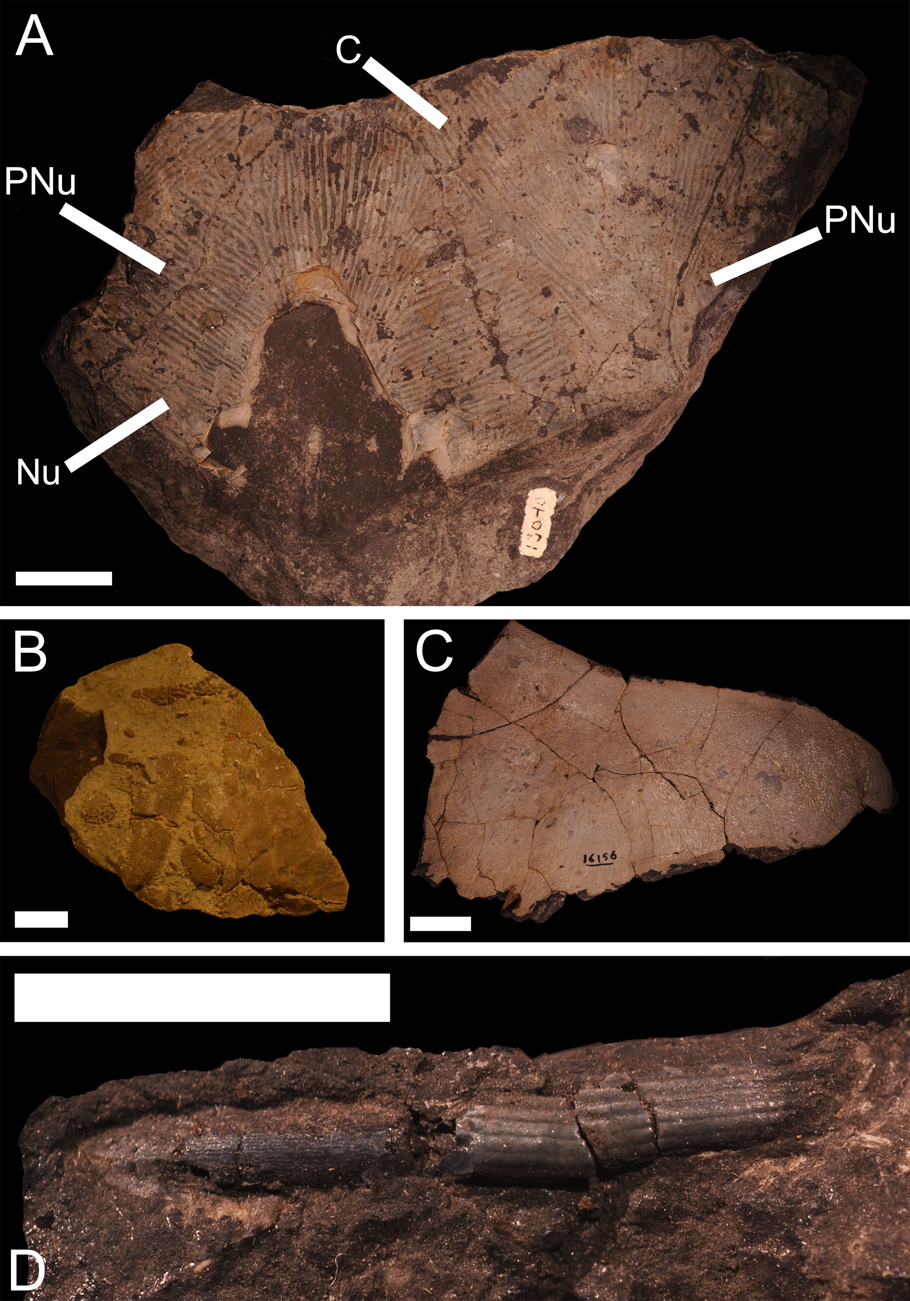 An examination of the Devonian fishes of Michigan [PeerJ]