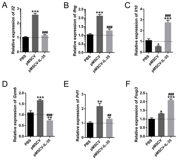 The mRNA level of Il2, Ifng, Il10, Gzmb, Prf1, and Foxp3 in vivo.