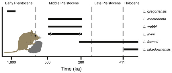 Temporal distribution of species of Leggadina.