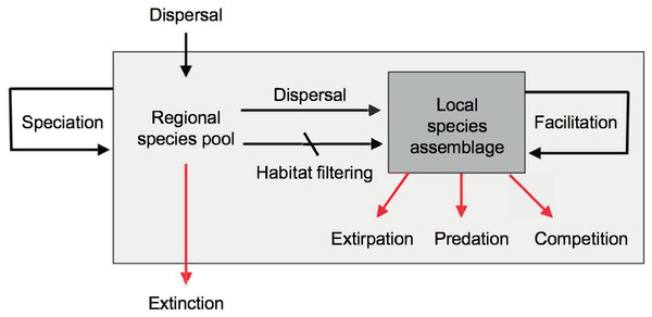 Main evolutionary and ecological processes contributing to the formation of species richness.