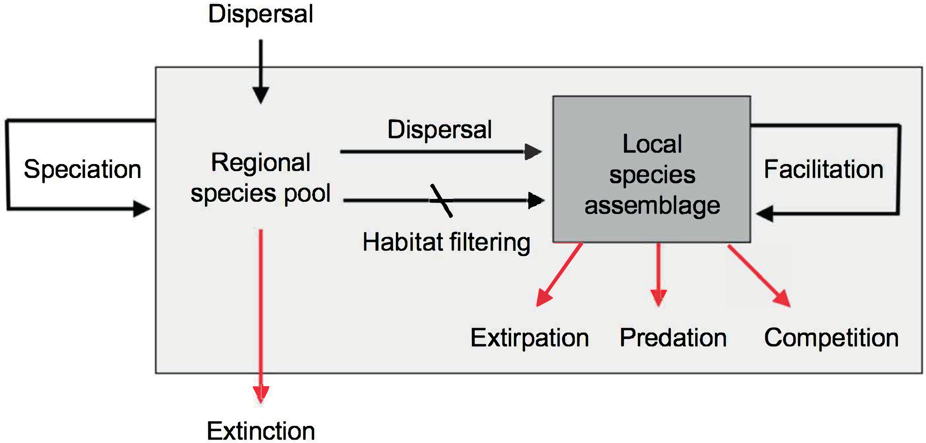 Conceptual and empirical advances in Neotropical biodiversity