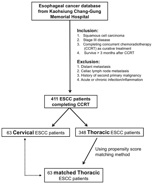 Algorithm for identifying locally advanced cervical and thoracic esophageal squamous cell carcinoma (ESCC) patients.