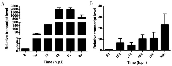 Transcriptional profile of NbHK in infected Sf9-III cells and midguts.