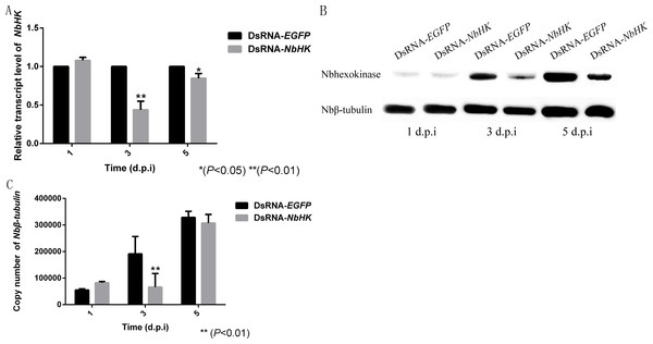 Effect of NbHK down-regulation on N. bombycis proliferation.