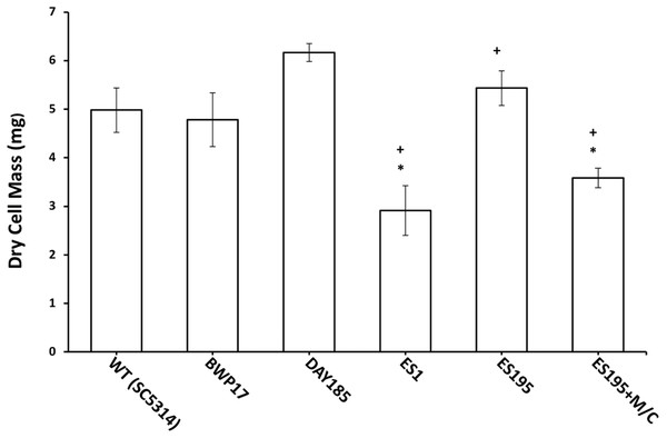 Biofilm formation is affected in Dfg5p and Dcw1p mutants.