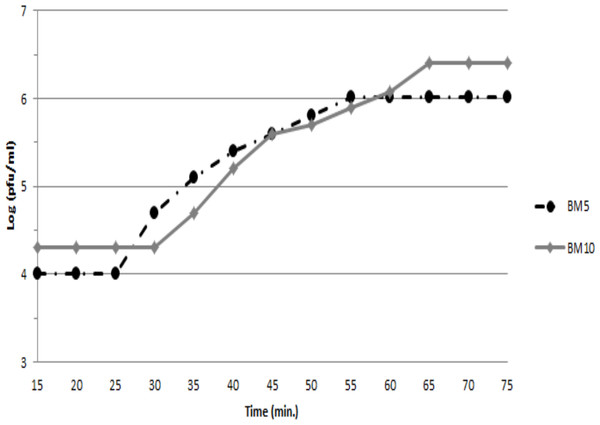 Single-step growth curve of BM5 and BM10 bacteriophages.