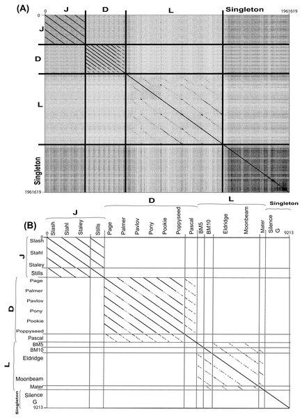Complete nucleotide genome sequence and single gene amino acid (large terminase) dot plot analysis of Bacillus megaterium reveals three clusters (D, L and J) and two singletons.