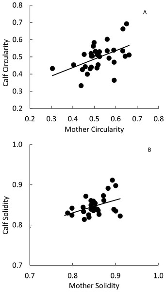 Mother-offspring regressions for (A) circularity and (B) solidity values of Masai giraffes in northern Tanzania.