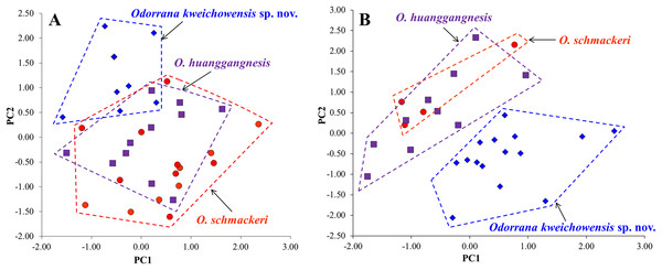 Plots of principal component analyses of Odorrana kweichowensis sp. nov., O. schmackeri, and O. huanggangnesis.