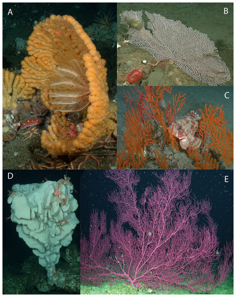Images depicting structure-forming benthic invertebrates reported.
