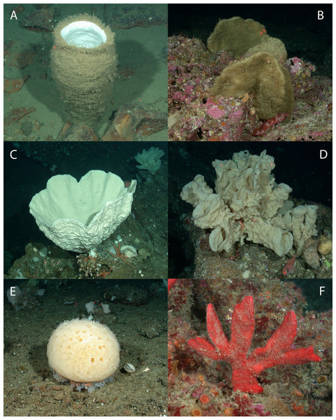 Representative images of the six sponge morphology classifications.