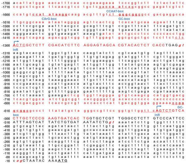 The conserved genetic elements in the Mractb1 5′-flanking region.