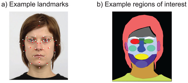 (A) Illustration of the 35 landmarks used across each face, before (red) and after (white) transformation to the average face.