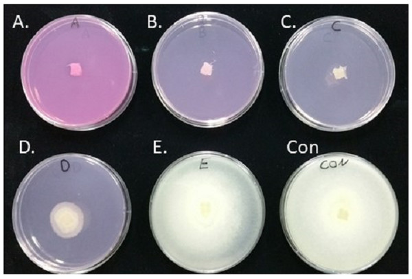 Inhibition of S. parasitica m ycelia growth on PDA plates containing different concentrations of Virkon-S.