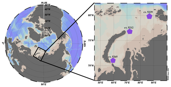 Location of the stations in the Kara Sea where L. helicina were collected. Schlitzer (2018).