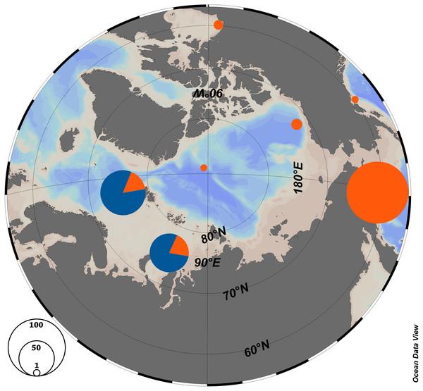 Haplotype distribution among the Arctic populations of Limacina helicina.