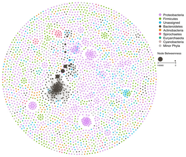 Ecological network based on the taxonomic classification of the mangrove trees litter decomposition metagenomic samples.