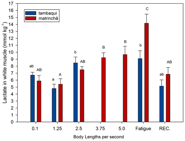 Lactate in white muscle of tambaqui and matrinchã exposed for 30 minutes to submaximal velocities (body lengths per second; bl s−1) and at fatigue.