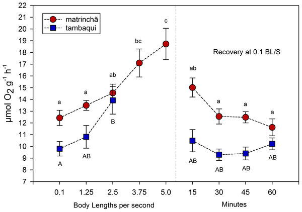 Oxygen consumption (MO2) of tambaqui and matrinchã exposed for 30 min to submaximal velocities (body lengths per second; bl s−1).