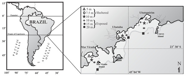 Map of the Ubatuba region (northeastern coast of São Paulo State), Brazil, showing the three bays and their respective sampling stations (adapted from Fransozo et al., 2013).