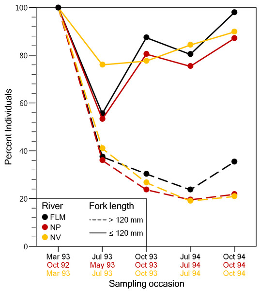 Evolution of the percentage of brown trout >120 mm fork length and ≤120 mm fork length captured for the first time (i.e., adipose fin not clipped), on each sampling event in the study streams.