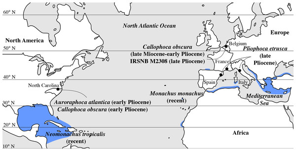 Geographic distribution of late Miocene to recent Monachinae in the North Atlantic realm (including Mediterranean Sea).