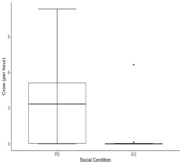 Median rate of crows per hour for 10 males of cohort I was higher when males were housed in the Perceived Dominance (PD) condition then when housed in the Social Group (SG) condition.