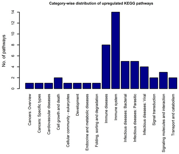 The KEGG category-wise distribution of the enriched pathways in the upregulated genes of the RA synovium.