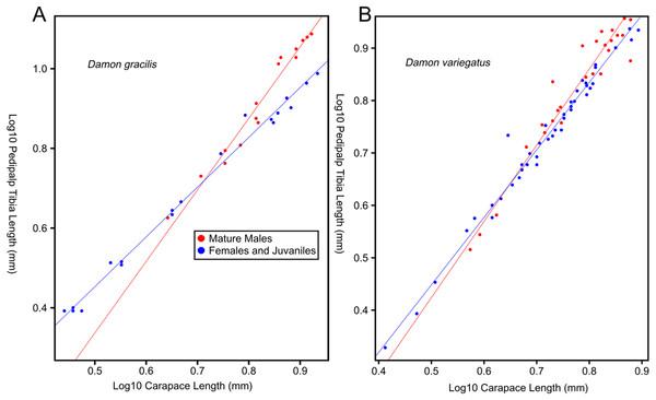 Relationship between log pedipalp tibia length and log carapace length.
