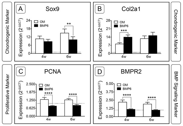 Expression of chondrogenic, proliferative and BMP signaling pathway genes in micromass cultures.