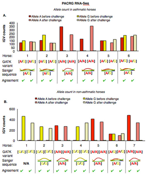Comparison of GATK variant calls and Sanger sequencing results for PACRG in asthmatic (A) and non-asthmatic (B) horses.