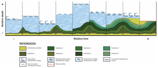 Evolution of the stromatolitic macrostructure over time.
