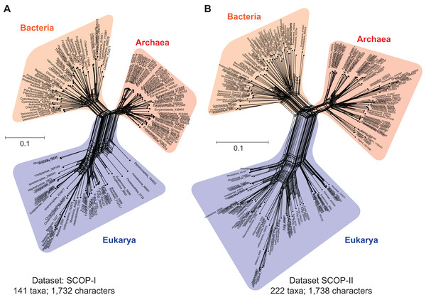 Data-display networks (DDN) depicting character conflicts among complex molecular characters.