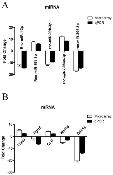 qRT-PCR validation of differentially expressed miRNAs and mRNAs.