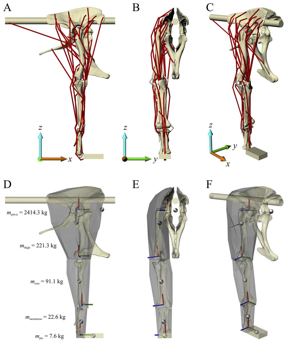 Cancellous Bone And Theropod Dinosaur Locomotion Part Iiiinferring