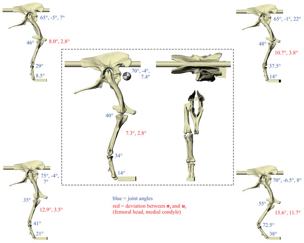 The postures tested for in Daspletosaurus.
