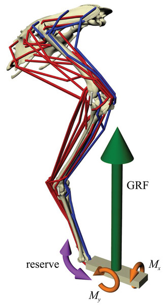 Musculoskeletal simulation of a given test posture.