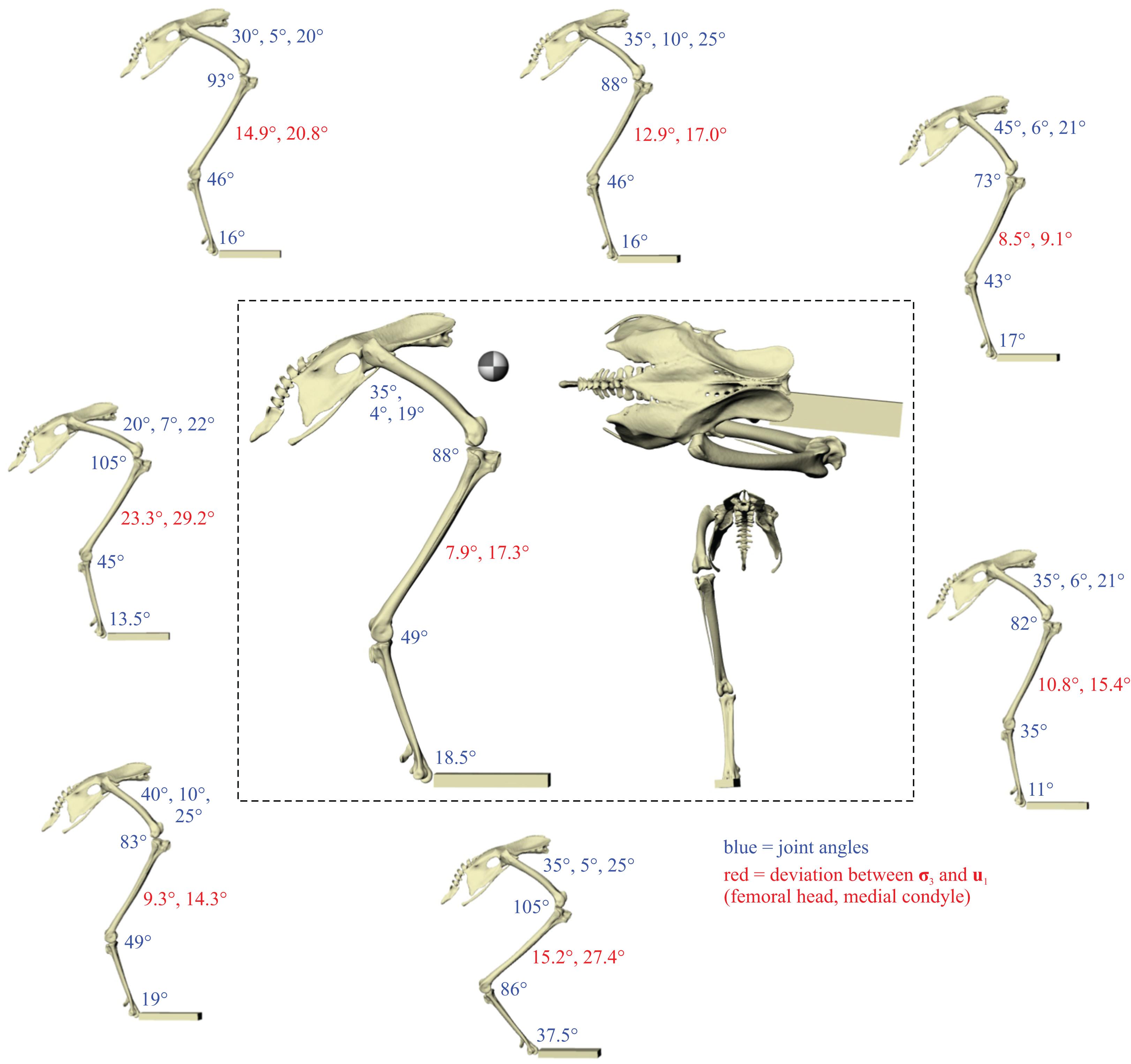 Diagram Kabel Body Tiger