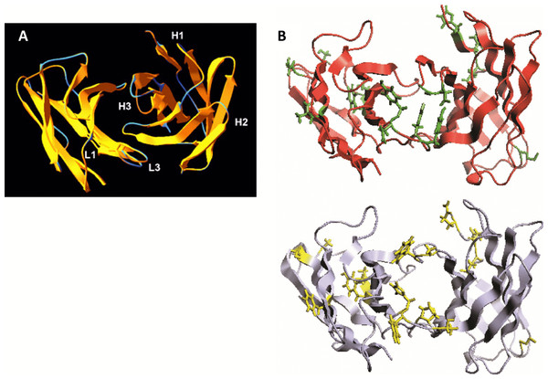 Somatic mutations and structural divergence between scFv TG130 and its germline precursor sequences.