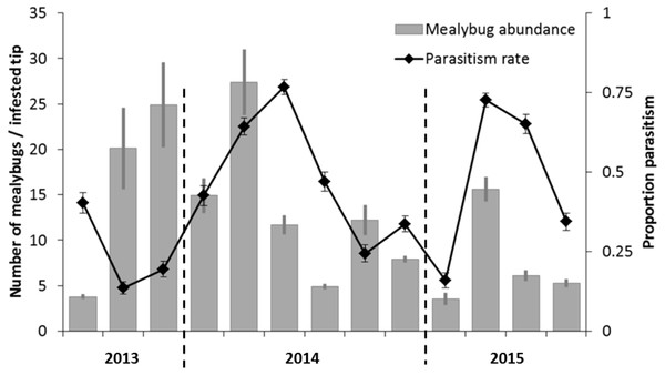 Bi-monthly mealybug population fluctuations in southern Vietnam, over a 2-year time period.