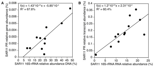 Positive correlation between 16S-rRNA and proteorhodopsin (PR) within the SAR11 clade.