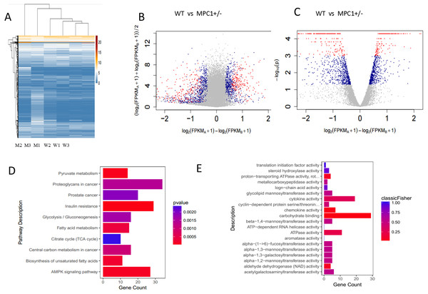 Transcriptome analysis of gene expression profile mRNAs in eWATs.