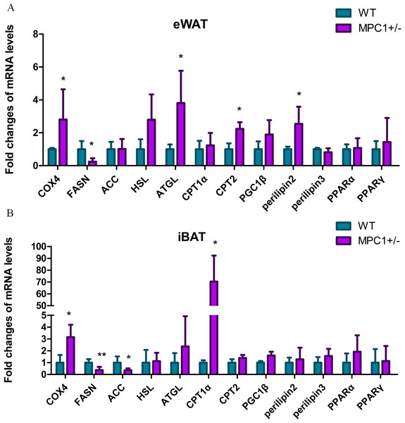 Energy metabolism-related genes influenced by MPC1 protein deficiency.