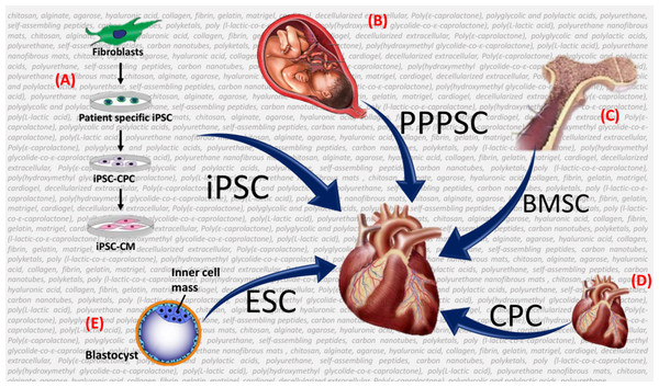 Schematic of the different types of stems that can be used on the biomaterial backbone for cardiovascular tissue engineering (TE).