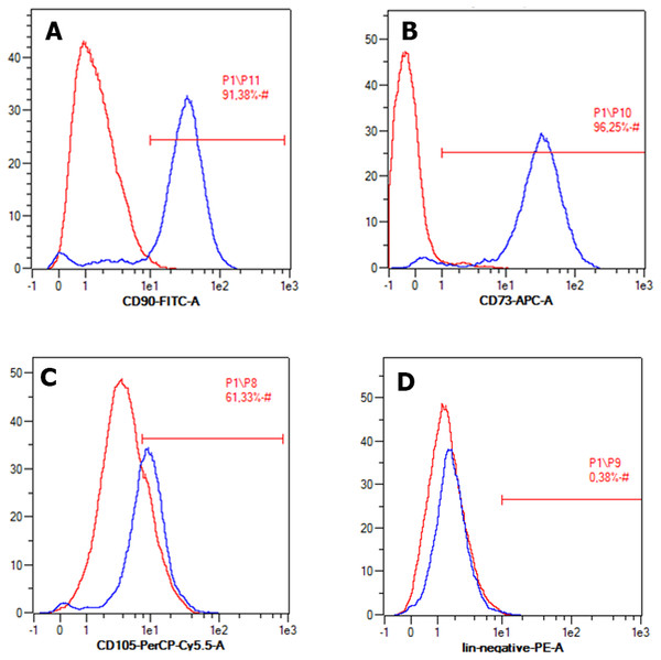 Flow cytometry result of specific ADSC cell surface markers.