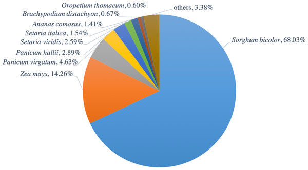 Distribution of hit plant species from BLAST search of PacBio-isoforms.